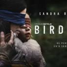 BirdBox-Banniere-800x445